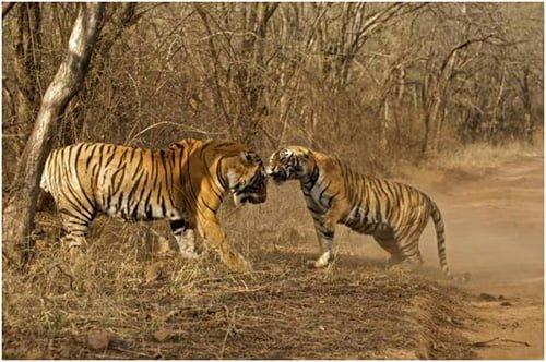 wild-rajasthan-day9